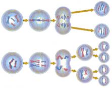 cell-replication-300x234